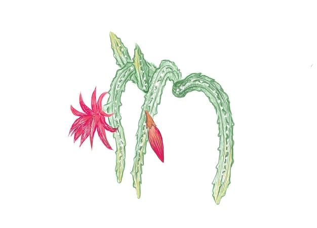 Рисованный эскиз кактуса disocactus mallisonii