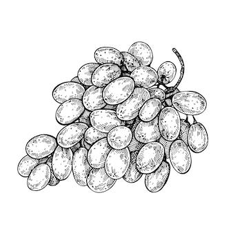 Ручной обращается эскиз виноградной грозди. чернила гроздь винограда