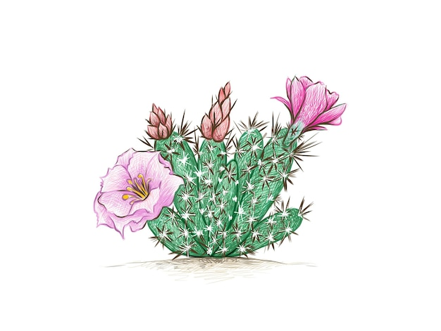 Grusonia 선인장 식물의 손으로 그린 스케치