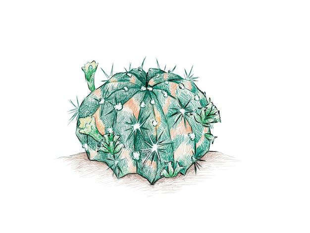 Gymnocalycium mihanovichii 선인장 식물의 손으로 그린 스케치
