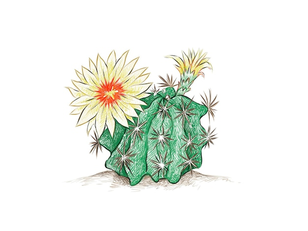 Hamatocactus 또는 고슴도치 선인장의 손으로 그린 스케치