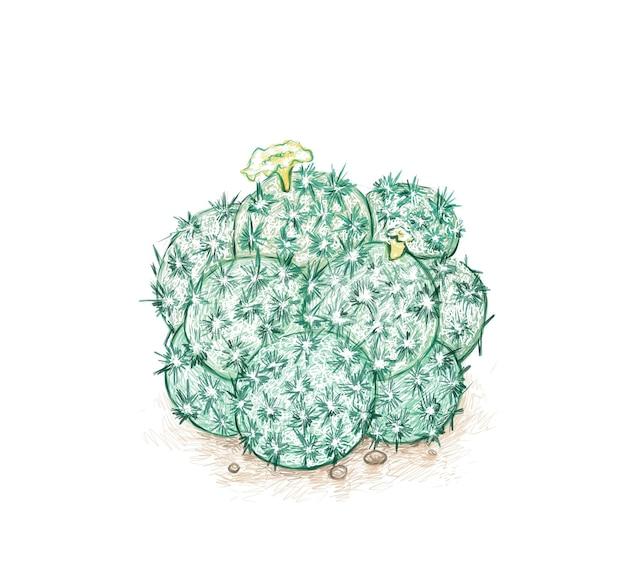 Mammillaria plumosa 또는 깃털 선인장의 손으로 그린 스케치