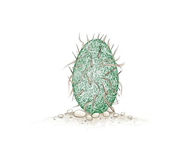 Рисованный эскиз кактуса oreocereus trollii