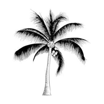 黒のヤシの木の手描きのスケッチ