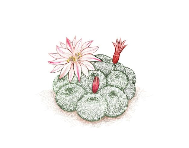 꽃과 rebutia 선인장의 손으로 그린 스케치