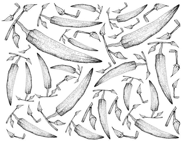 Hand drawn sketch okra or lady finger plants.
