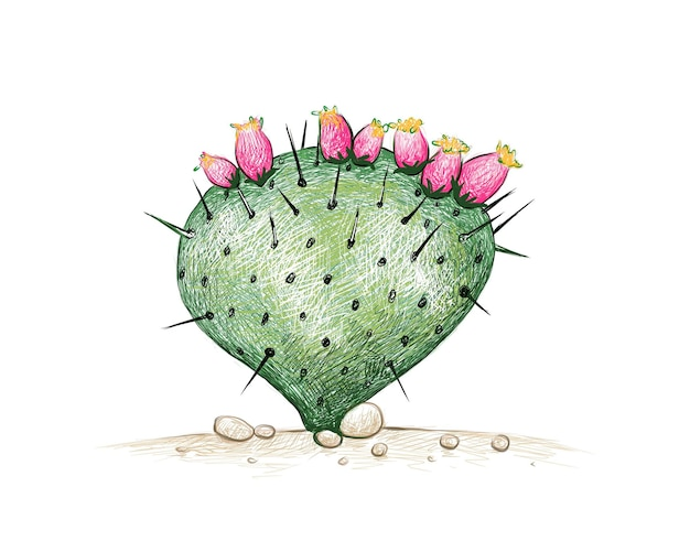 Hand drawn sketch of opuntia macrocentra cactus plant