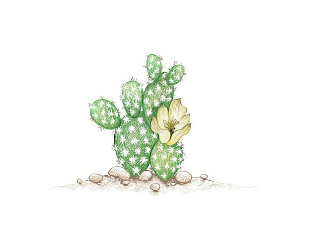 Hand drawn sketch of opuntia microdasys cactus