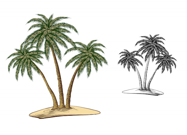 Hand drawn sketch of palm trees in color, isolated on white