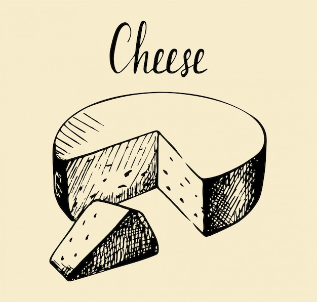 Hand drawn sketch piece of cheese vintage illustration.