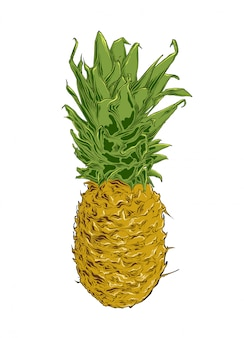 Hand drawn sketch of pineapple in color. isolated .