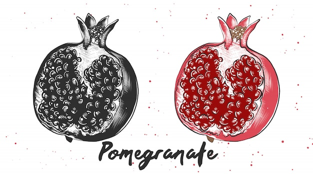Hand drawn sketch of pomegranate