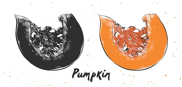 Hand drawn sketch of pumpkin