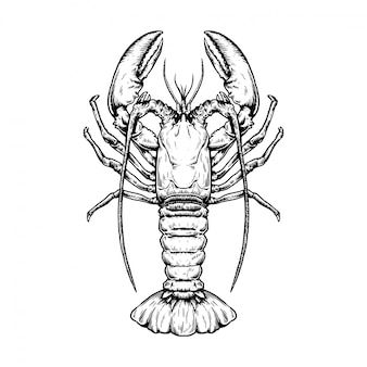 Hand drawn sketch seafood illustration of lobster