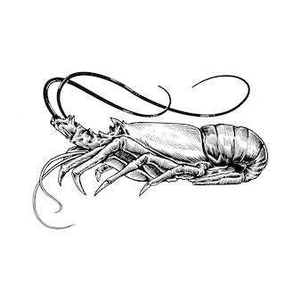 エビの手描きスケッチシーフードイラスト