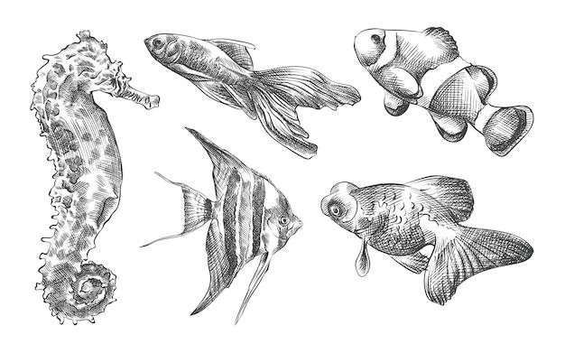 Hand-drawn sketch set of aquarium fish. set consists of guppy, seahorse, nemo, samese fghting fsh, goldfish, scalaria