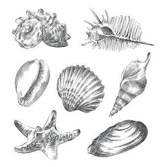 Hand-drawn sketch set of different sea shells. set includes triton and murex shells, cowrie shells, tulip, star, natica, and tun shells, bivalves, tellins, and scallops, small conchs