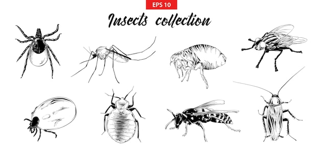 Hand drawn sketch set of insects