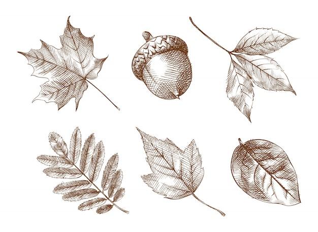 Набор рисованной эскиз осенних желтых листьев. в набор входят листья березы, клена, дуба, ивы, осины, рябины, желудя.