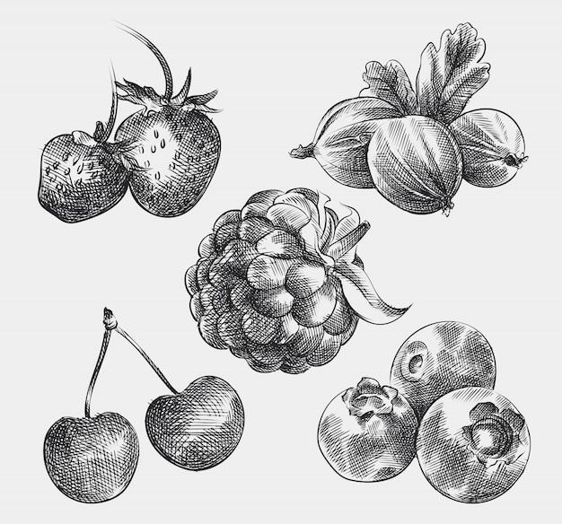 果実の手描きスケッチセット。イチゴ、ラズベリー、ブラックベリー、メドラー、チェリー、チェリー、ブルーベリー、スグリ、桑のセット