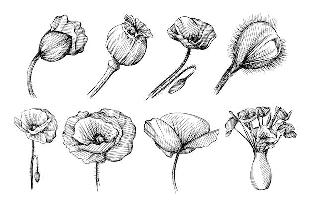 흰색 바탕에 양 귀 비 꽃의 손으로 그린 스케치 세트. 피는 양귀비. 꽃병에 양 귀 비 꽃의 꽃다발입니다.