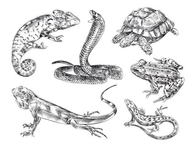 爬虫類の手描きスケッチセット。セットには、トカゲ、カメレオン、ヘビ、カメ、カエル、イグアナ、トカゲ、ヤモリが含まれます。