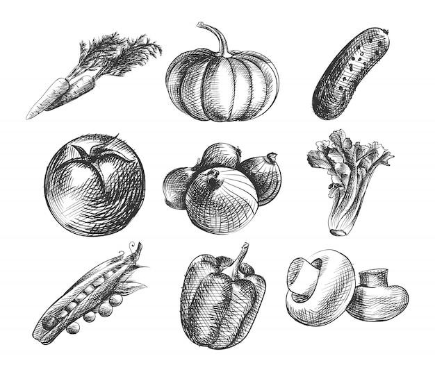Набор рисованной эскиз овощей. в набор входят морковь, тыква, огурец, помидор, лук, листья салата, грибы, горох, болгарский перец