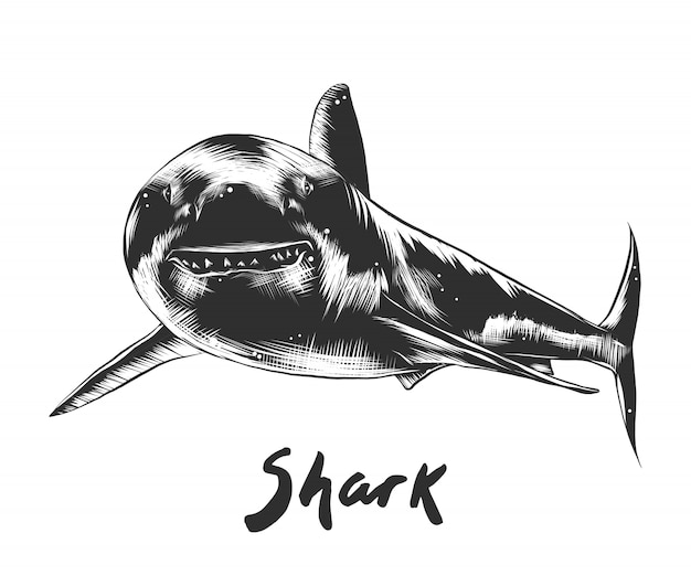 Hand drawn sketch of shark in monochrome