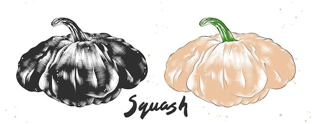 Hand drawn sketch of squash