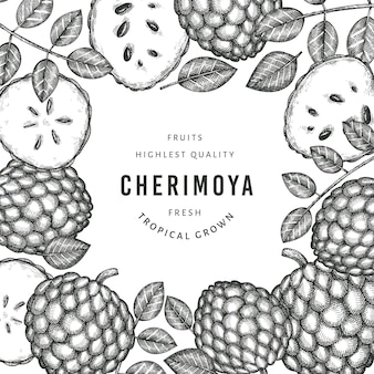 Hand drawn sketch style cherimoya . organic fresh fruit  illustration. engraved style botanical  template.
