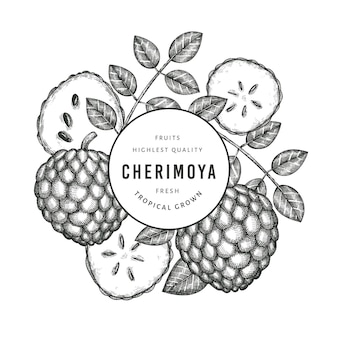 Hand drawn sketch style cherimoya . organic fresh fruit  illustration on white background. engraved style botanical  template.