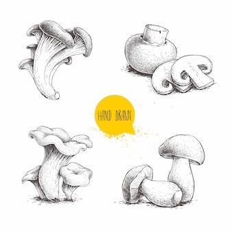 Набор рисованной эскиз стиля грибы композиции. шампиньоны с нарезками, устрицами, лисичками и белыми грибами.