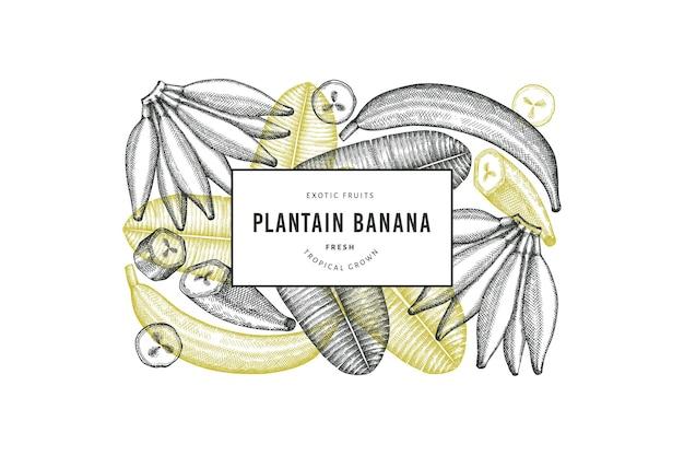 손으로 그린 스케치 스타일 질경이 배너입니다. 유기농 신선한 과일 벡터 일러스트 레이 션. 레트로 이국적인 바나나 과일 디자인 서식 파일
