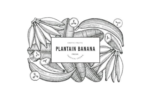 손으로 그린 스케치 스타일 질경이. 유기농 신선한 과일 그림입니다. 레트로 이국적인 바나나 과일 디자인 서식 파일