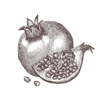 손으로 그린 스케치 스타일 석류. 분기에 석류입니다.