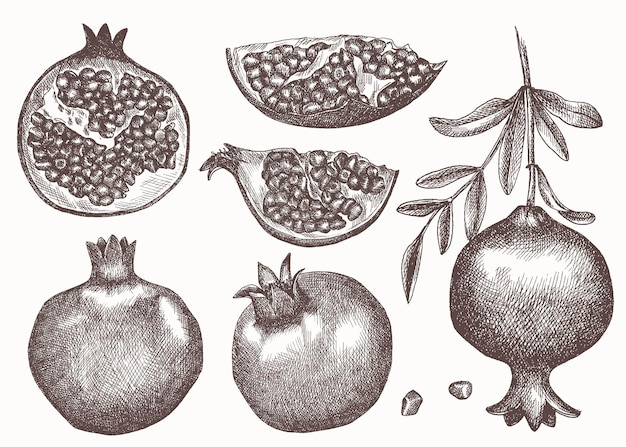 손으로 그린 스케치 스타일 석류 세트. 씨앗과 잎을 가진 석류.