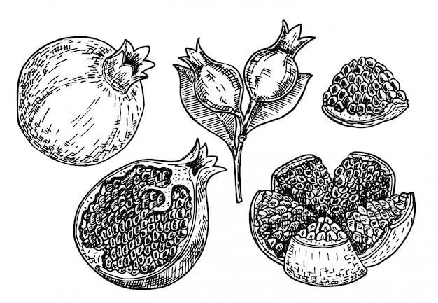 손으로 그린 스케치 스타일 석류 세트입니다. 씨앗과 잎으로 석류.