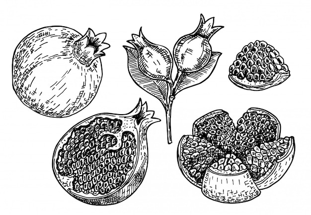 Hand drawn sketch style pomegranates set. pomegranates with seeds and leaves.