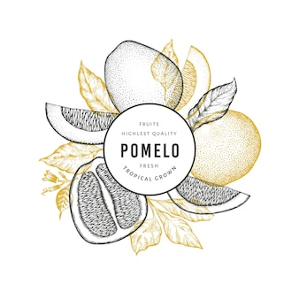 Hand drawn sketch style pomelo banner. organic fresh fruit  illustration. retro fruit  template Premium Vector