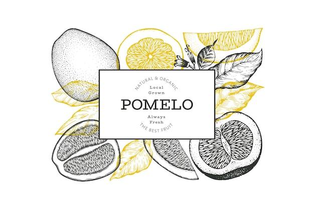 手描きのスケッチスタイルのザボンバナー。有機の新鮮な果物のベクトル図です。レトロなフルーツのデザインテンプレート