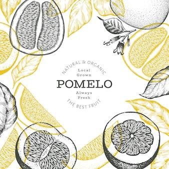 손으로 그린 스케치 스타일 포멜로 배너입니다. 유기농 신선한 과일 벡터 일러스트 레이 션. 레트로 과일 디자인 서식 파일