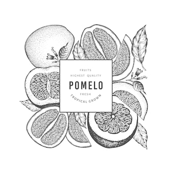 Hand drawn sketch style pomelo label