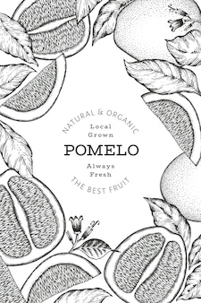 Hand drawn sketch style pomelo. organic fresh fruit illustration. retro fruit design template