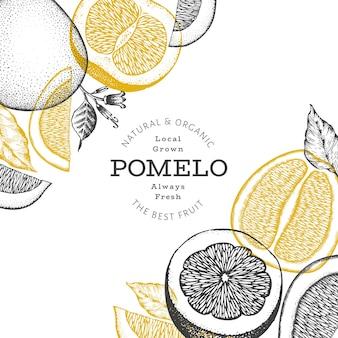 손으로 그린 스케치 스타일 포멜로. 유기농 신선한 과일 그림입니다. 레트로 과일 디자인 서식 파일