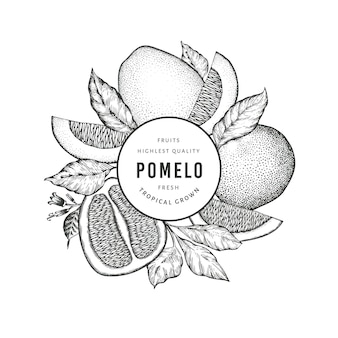 Hand drawn sketch style pomelo . organic fresh fruit  illustration. retro fruit  template