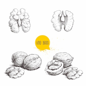 Hand drawn sketch style walnuts set.  single whole, half and walnut seed.