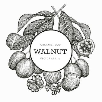 손으로 그린 스케치 호두입니다. 유기농 식품 일러스트입니다. 빈티지 너트 그림입니다. 새겨진 스타일 식물 배경.