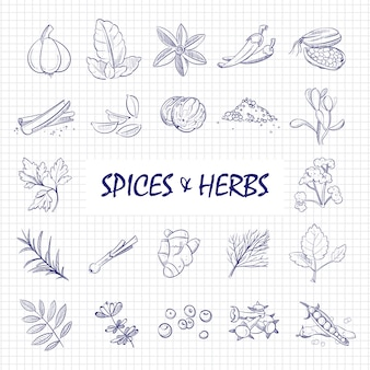 Hand drawn spices and herbs big set on notebook page
