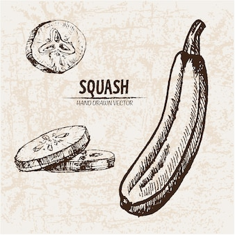 Hand drawn squash collection