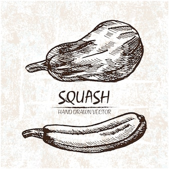Hand drawn squash design